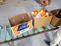 Прямые  поставки апельсинов и мандаринов  из Египта