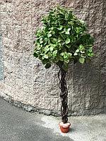Дерево Тополь (Ботаническая копия)