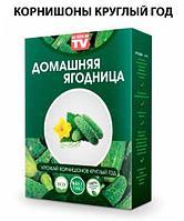 Чудо-набор для выращивания овощей и зелени дома «Сказочный огород круглый год» без ГМО (Корнишоны)