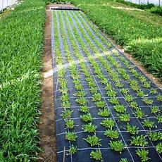 Термоизоляционные настилы для растений, агроволокно
