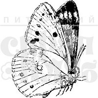 Штамп Бабочка 3