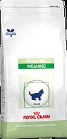 Сухой корм для котят от 4 недель до 4-х месяцев с ослабленным иммунитетом Royal Canin Weaning Pediatric