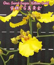 """Орхидея азиатская. Под Заказ! Onc. Sweet Sugar """"Million Gold"""". Размер: 2.5""""."""