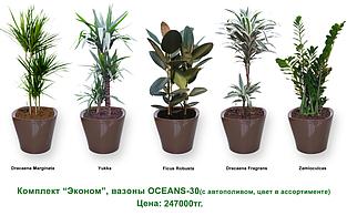 Экспресс - озеленение, комплект «Эконом»