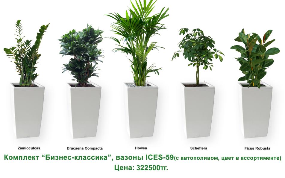 Экспресс - озеленение, комплект «Бизнес классика»