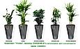Экспресс - озеленение, комплект «Успех»  , фото 2