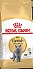 Сухой корм для кошек породы британская короткошерстная Royal Canin British Shorthair