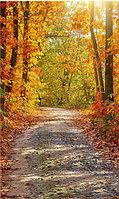 Фото фоны вертикальные, Виниловые, 200х300см. Осень, фото 1