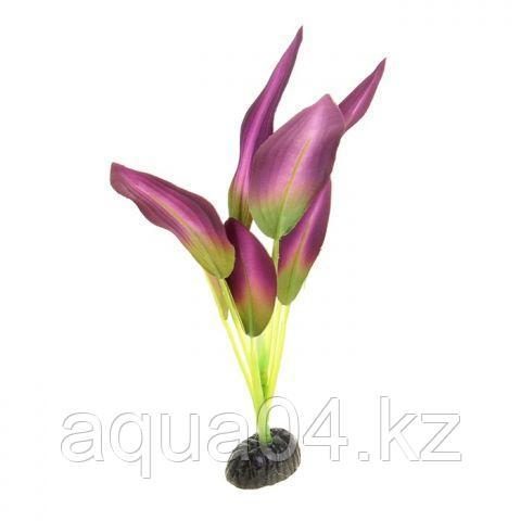 Шелковое растение Эхинодорус зелено-фиолетовый 30 см