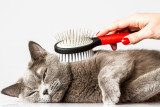 Груминг: расчёски, пуходёрки, когтерезы