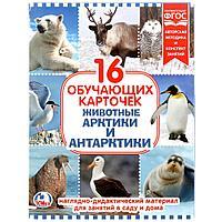 """Умка Наглядно-дидактический материал - 16 развивающих карточек """"Животные Арктики и Антарктики """""""