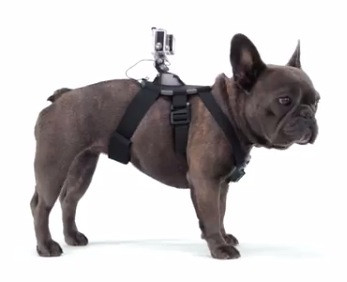 Крепление на собаку для GoPro 5/4/3+/3/SJCAM/Xiaomi (Dog Harness)