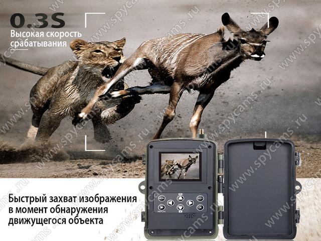 http://www.spycams.ru/slider/1000/filin-hc-801-lte-2_b.jpg