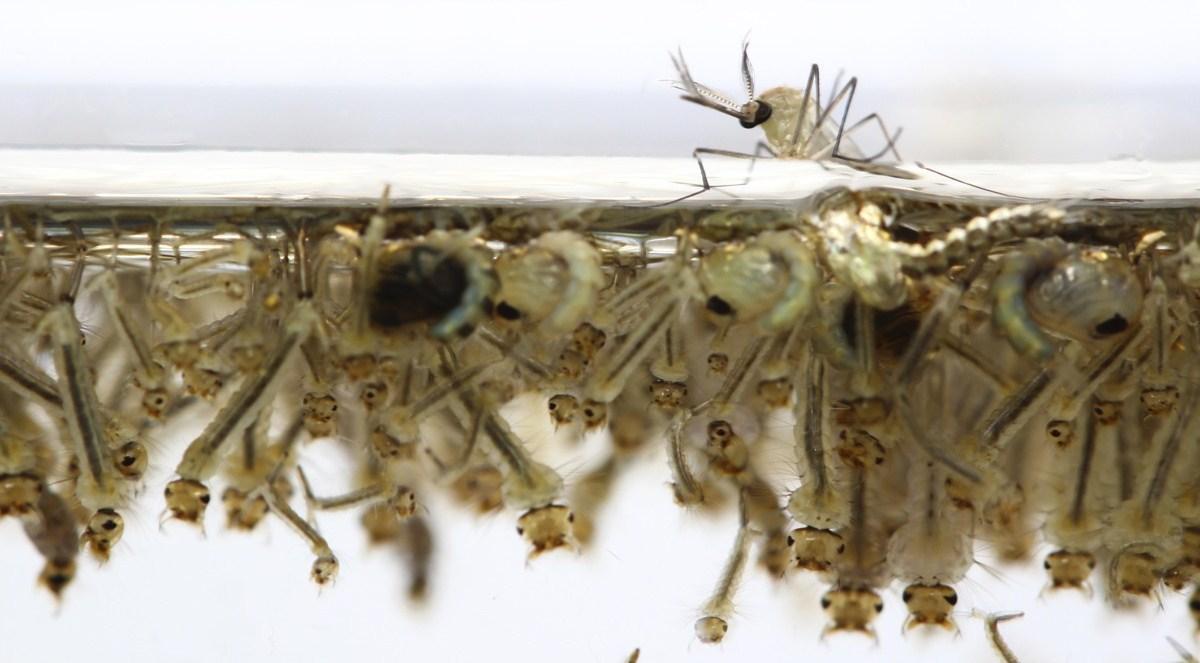 Уничтожение личинок комаров