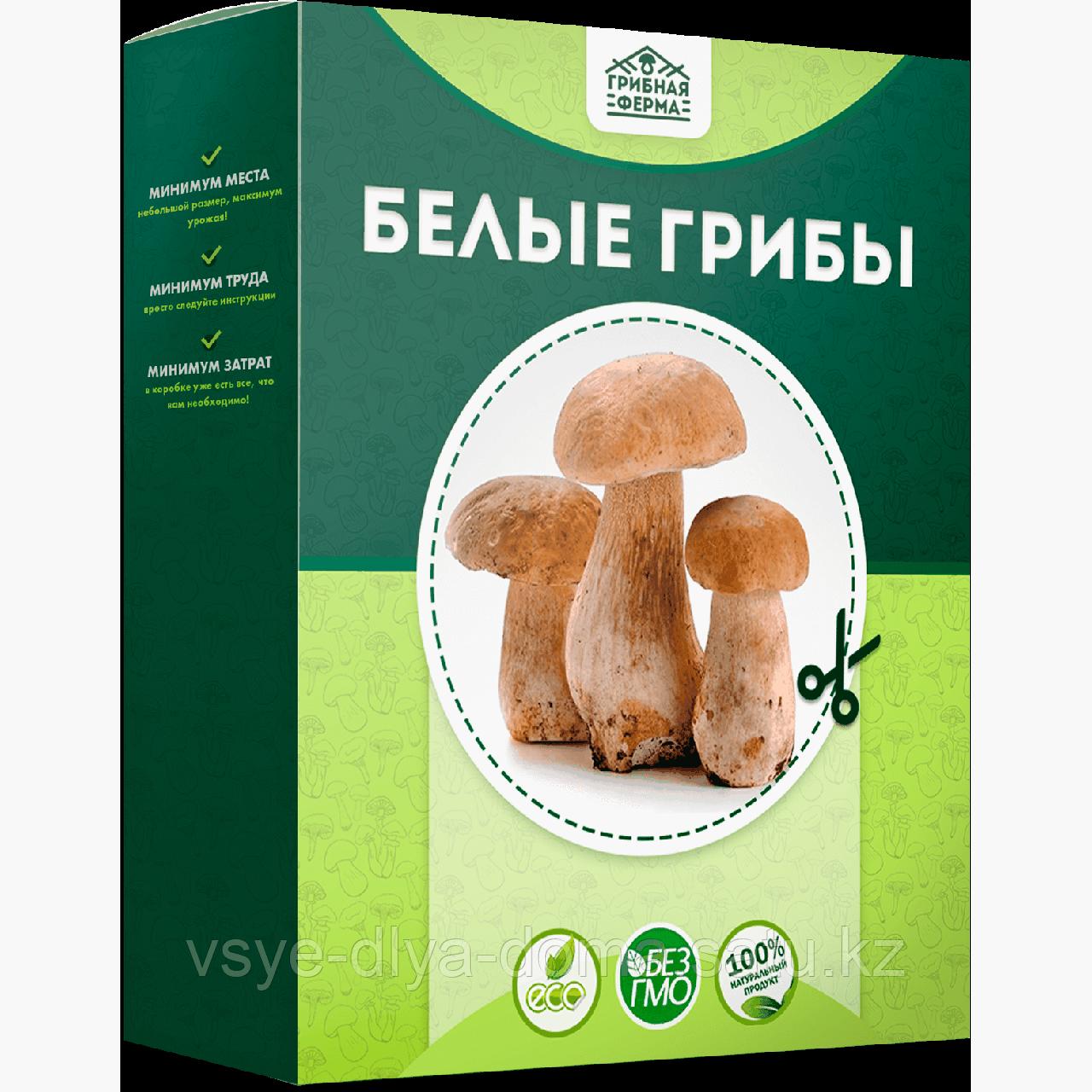 Домашняя грибница — для выращивания грибов в домашних условиях