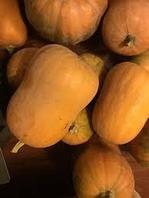 Оптовая продажа тыквы, фото 1