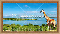 """Картина или постер """"Жираф"""""""