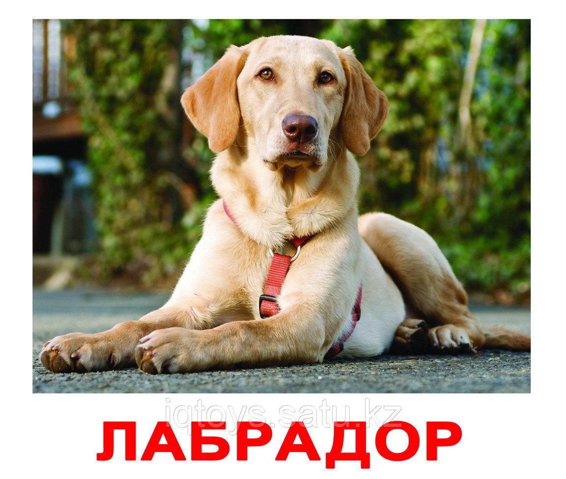 Комплект карточек Породы собак