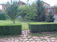Деревья лиственных пород (тополь,липа,рябина, дуб и др.)