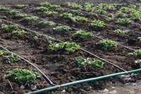 Полив огорода и приусадебного участка!