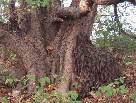 """Маскировочная накидка """"Леший"""" подходит для охоты в лесу, зарослях зеленой травы и кустах в осенний и весенний периоды"""