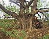 Маскировочная накидка Леший (зелень, лес)
