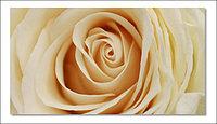 Постер Роза