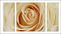 Триптих Роза