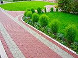 Высадка уличных деревьев,газонов,кустарников и цветников, фото 4
