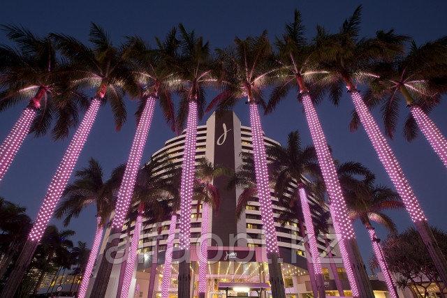 Светодиодный экран из тысячи огней обернутых вокруг пальм
