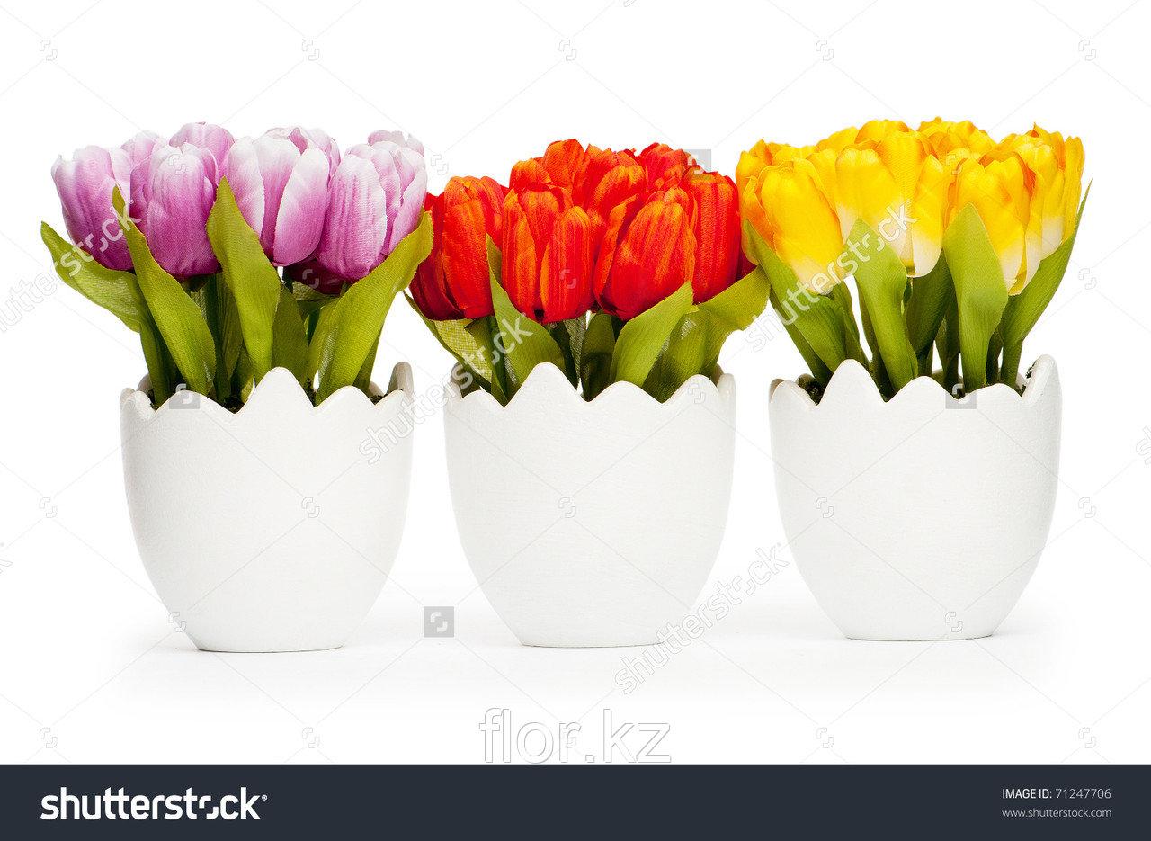 Тюльпан в горшочках!)