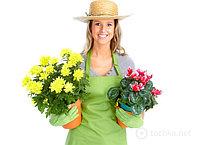 Консультация флориста с выездом