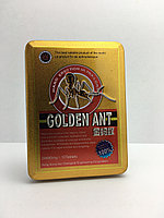 GOLDEN ANT