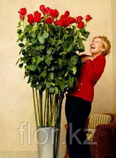 Роза 110 см всего за 900 тг!