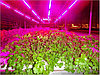 Светотехнический  расчет по фитоосвещению теплиц и растений - Alexel в Алматы