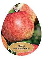 Яблоня Приземленное, фото 1