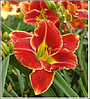 ЛИЛЕЙНИК Hemerocallis Fire and Fog