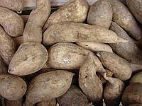 Батат(сладкий картофель)