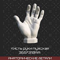 Кисть руки вертикальная