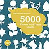5000 flower and plant motifs + CD