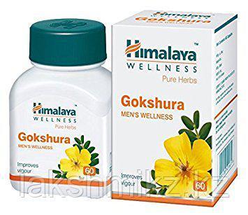 Гокшура (Gokshura Himalaya) - 60 тб. Для здоровья почек