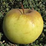Саженец яблони Лимонка ММ 106