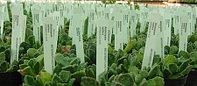 Садовые бирки-колышки