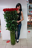 Роза 110 см всего за 900 тг!, фото 2