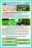 Плакаты Антропогенный ландшафт