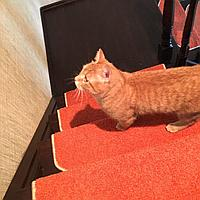 Коврики для лестниц Ангара оранжевый24*55  в розницу