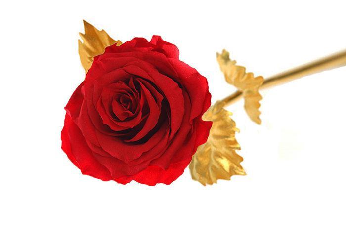Вечная живая Роза на золотом стебле