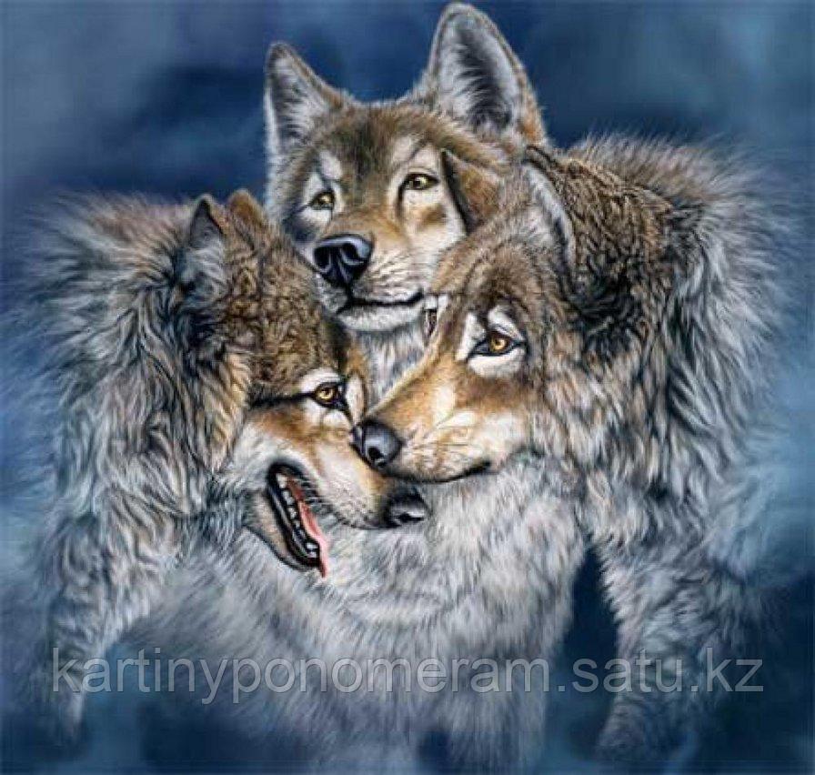 "Картина по номерам ""Три волка"""