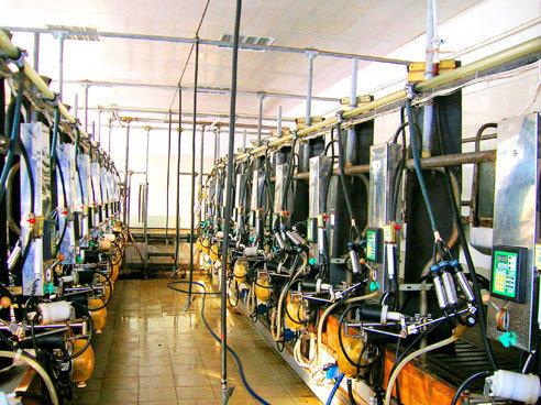Установка доильная «Елочка» УДА-16А, фото 2