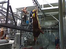 Комплект оборудования для убойного цеха, произв - 30 голов КРС/смену, фото 2